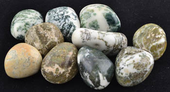 1 Lb Tree Agate tumbled
